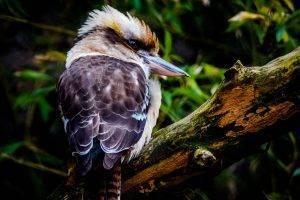 Bad-ass bird
