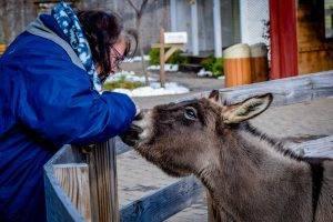 Margaret and the Donkey