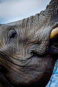 The Elephant in the Room that is not quite Africa